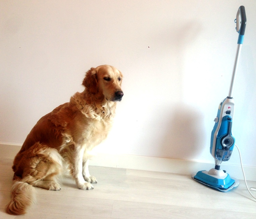 dog aqua steam cleaner